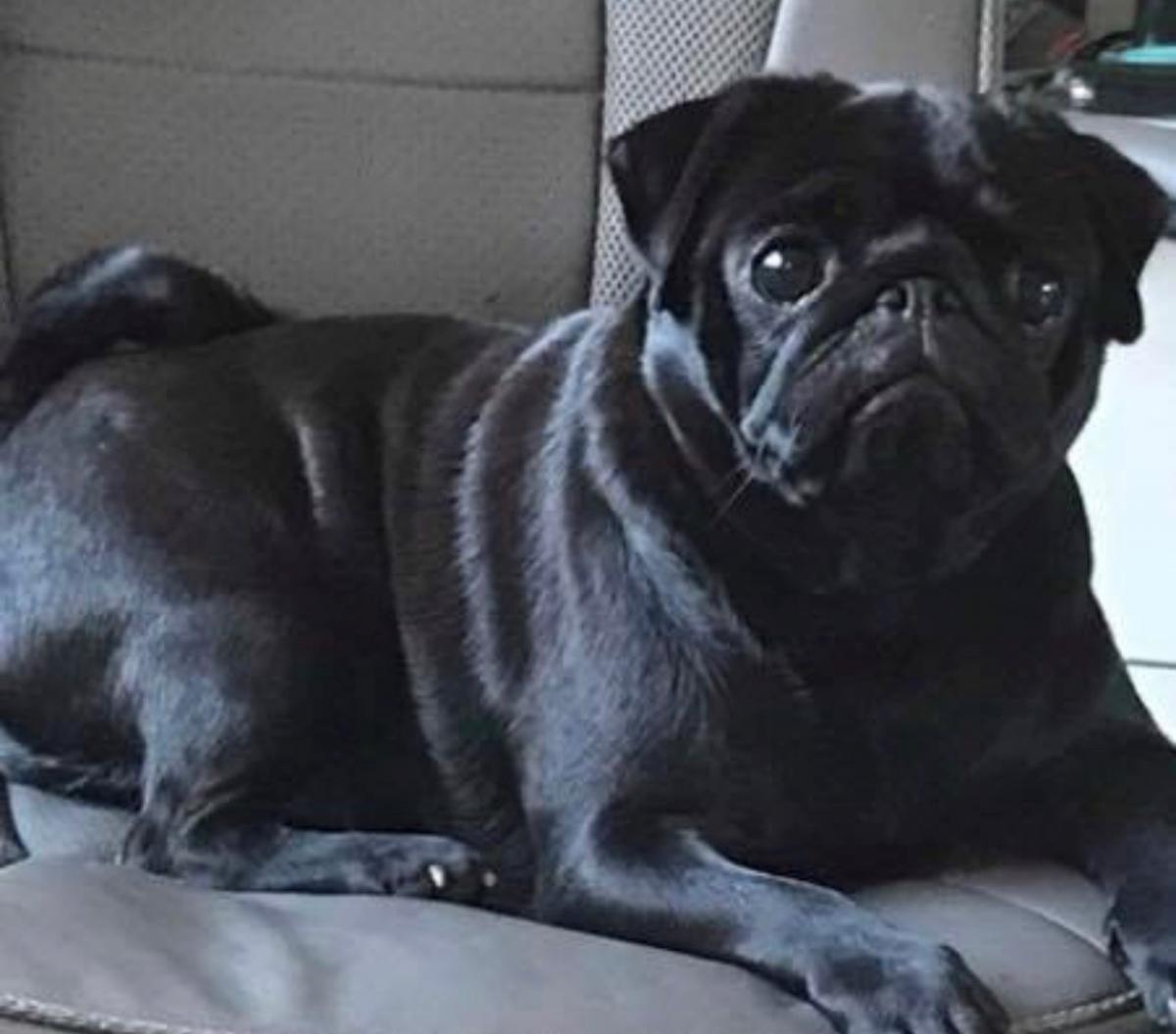Blackburn family put up £500 reward to find Poppy the dog
