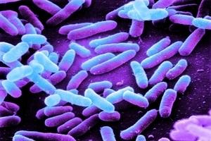 People travelling to Egtpy have returned with a serious illness caused by E. coli infection.