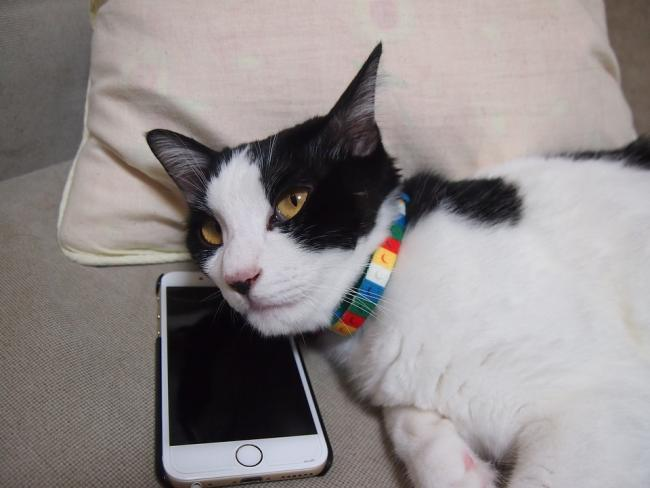 Cats charity sets up helpline for grieving pet owners
