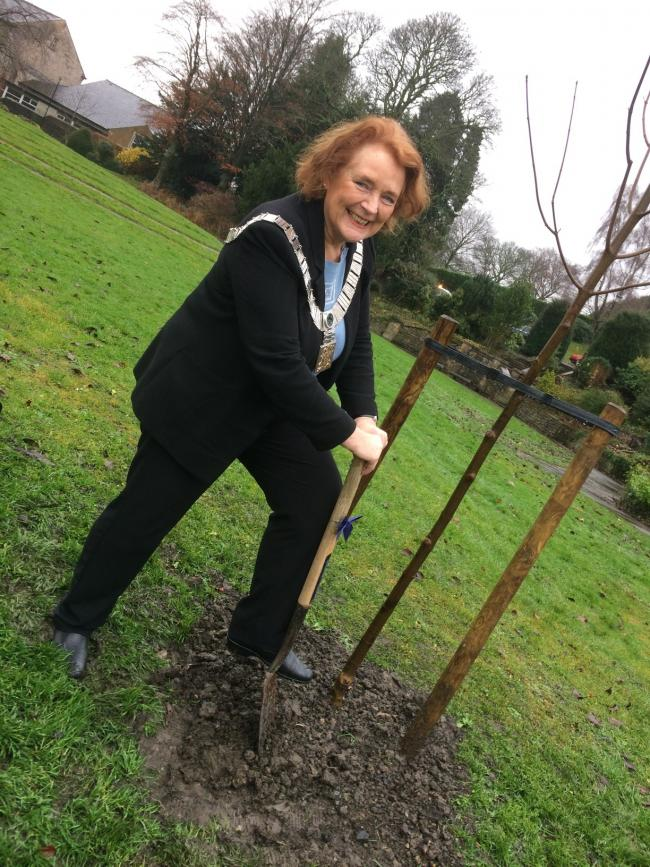 Ribble Valley Mayor Stella Brunskill has planted trees in Clitheroe and Longridge as part of the Woodland Trust's Great Climate Fightback