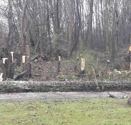 Felled trees in Great Harwood