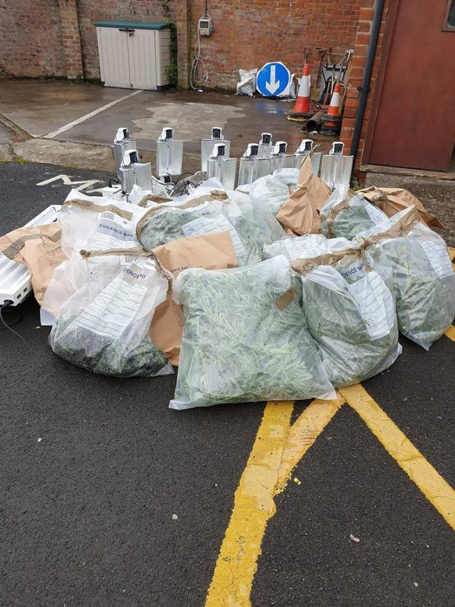 The haul of cannabis was seized by police