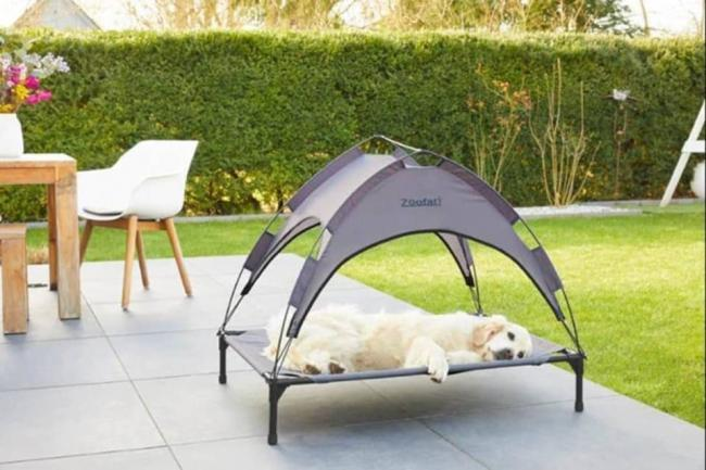 UK heatwave: Lidl launch cooling sun bed for dogs - for less than £20