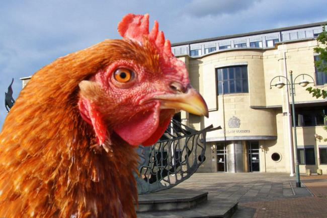 Composite image: Bradford Crown Court by T&A staff, stock photograph of brown chicken via pikrepo.com