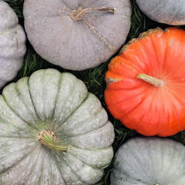Lancashire Telegraph: Mrs Downsons has a variety of pumpkins (Facebook/@mrsdownsons)