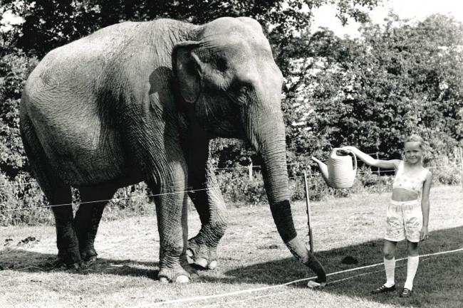 Emily Cottington offers Tina the elephant a drink at Edisford Bridge in 1990