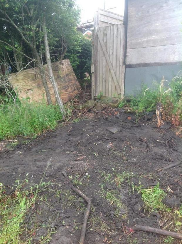 Lancashire Telegraph: The Japanese Knotweed is continuing to grow, say residents in Darwen despite BwD council saying they had treated it