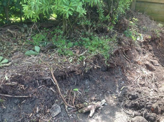 Lancashire Telegraph: The land on which Japanese Knotweed has been growing in Darwen