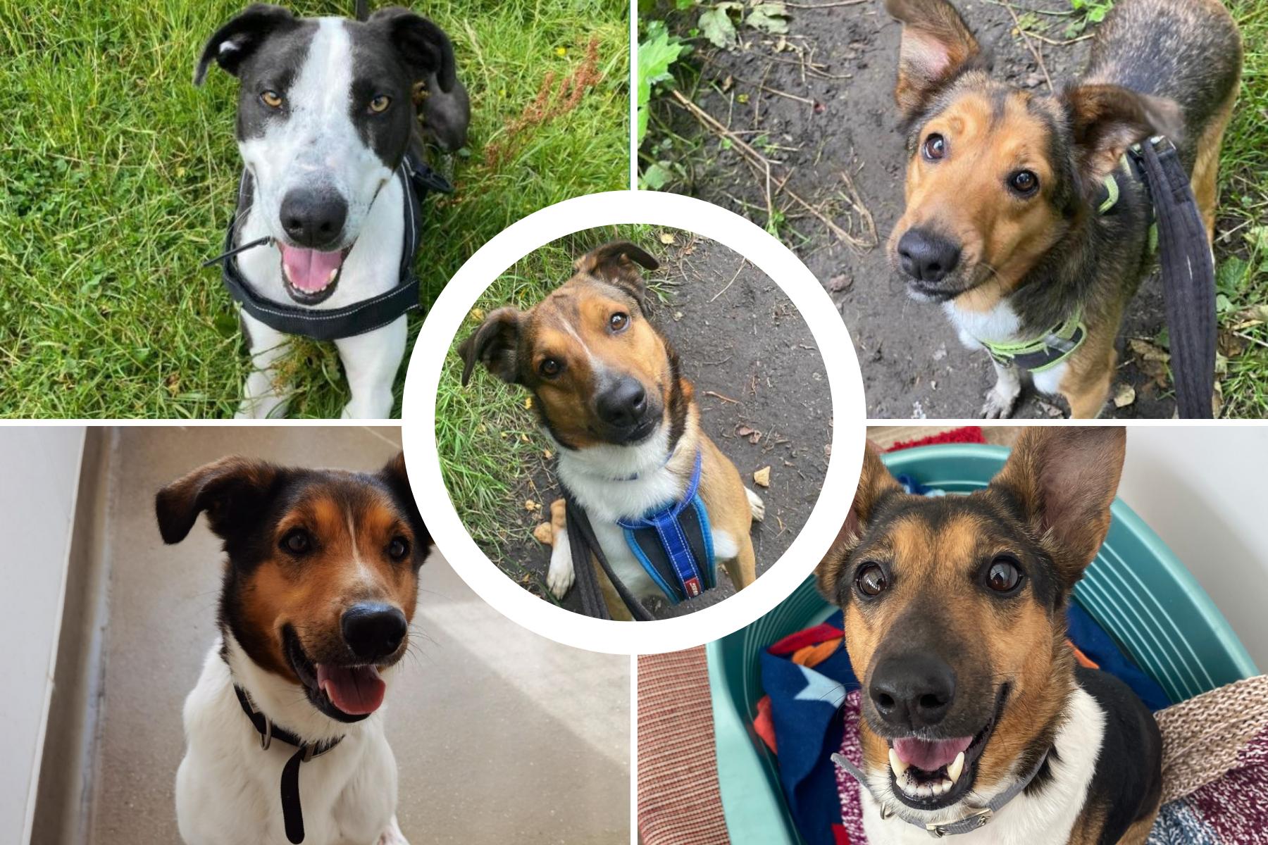 6 anjing di RSPCA di Lancashire ini mencari rumah selamanya