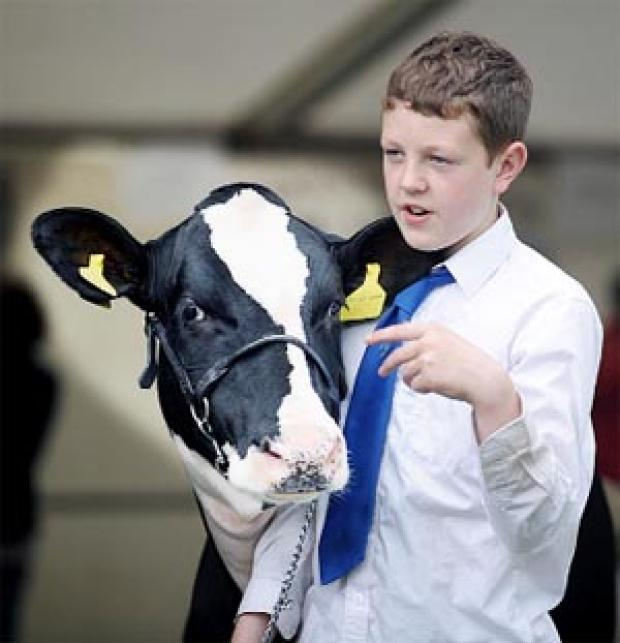 PRIZE BID Claughton-on-Brock's Billy Barber prepares to take his cow for showing.