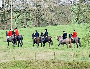 'Ilegal hare hunt' claims probe in Pendle