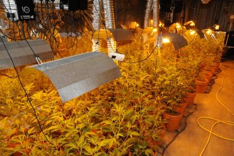 Inside the cannabis-growing bunker.