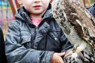 Four-year-old Logan Brodie with Amigo the spotted owl. Above left, Kris Hopkins and daughter Mia, 19 months, with Del the hawk.