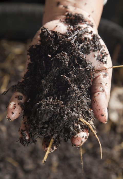 Make sure compost is not past its best