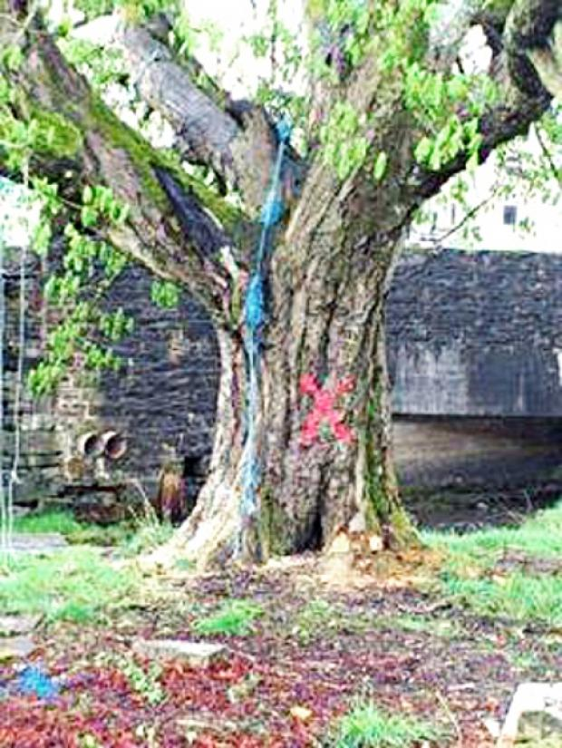 Builders pledge to review Helmshore tree demolition