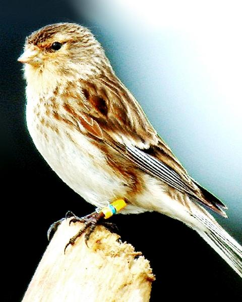 AT RISK The twite