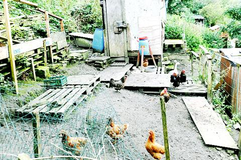 Darwen allotment-holders protest at animals order