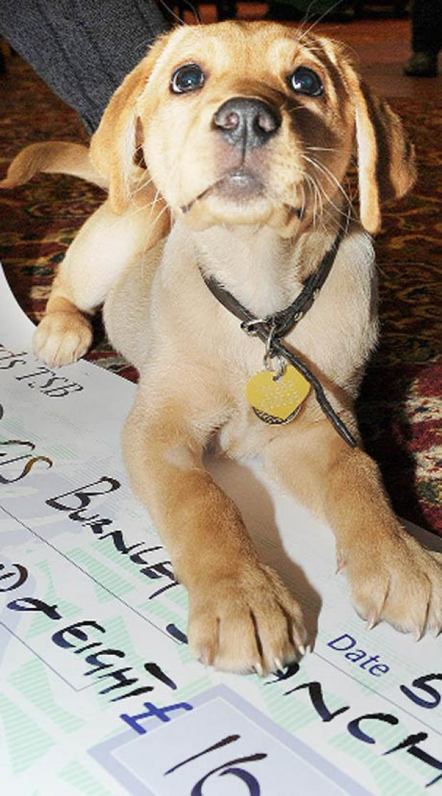 East Lancs guide dog 'Bene' to be named after a top tipple