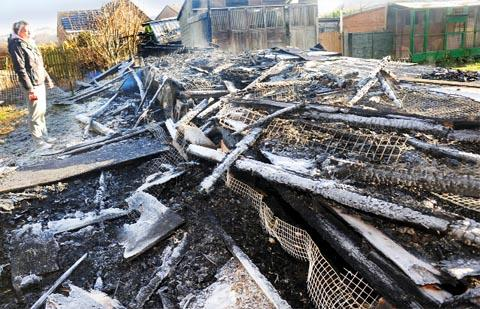 Lancashire Telegraph: FAMILY DEVASTATED Heather Williams-McLean  surveys the remains of her grandfather's pigeon loft on Quarry Street, Padiham, after a devastating fire