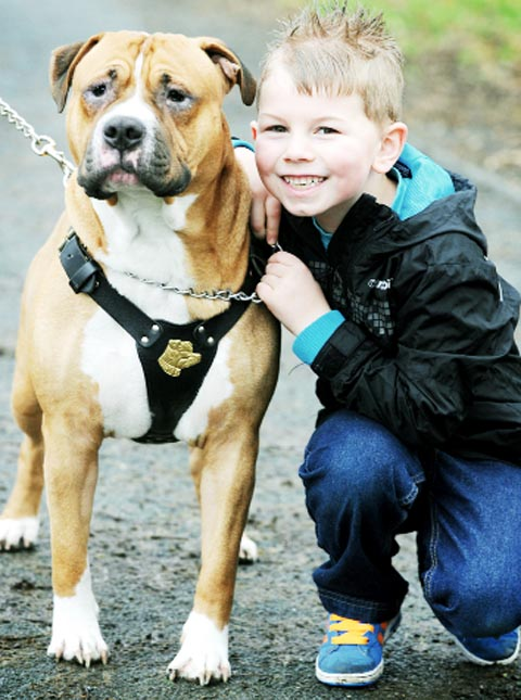 PUPPY LOVE JJ McCarthy with his new friend English bulldog Blaze, who needs urgent treatment