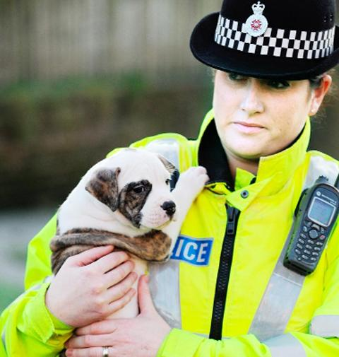 An officer takes care of a pup found at the address