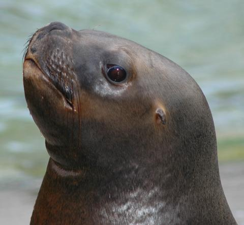 Meet the sealions at Blackpool Zoo
