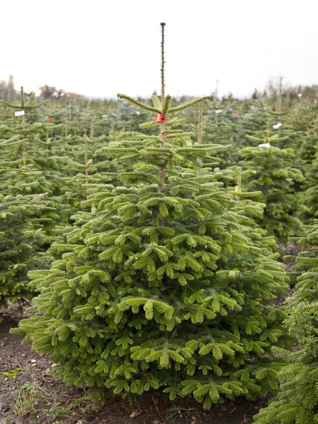 Trees-y does it with a range of top Christmas tips
