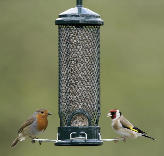 FEEDING A Robin and a goldfinch in a garden