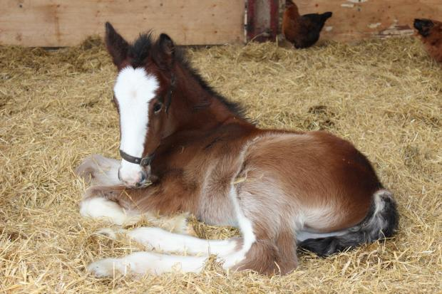 East Lancs horses and ponies in need of new stables