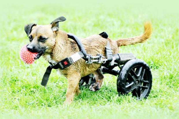 Toby on a roll with his new set of wheels