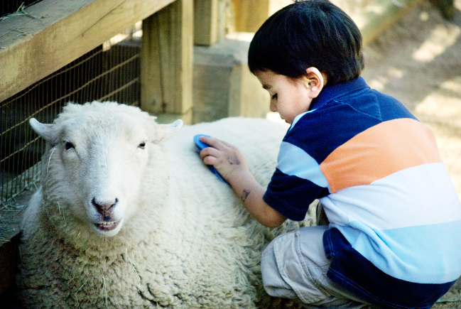 Children enjoy petting animals at farms across East Lancashire
