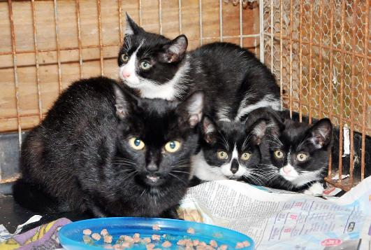 Lancashire Telegraph: The stray cat and three kittens taken in by Eunice Faulkner