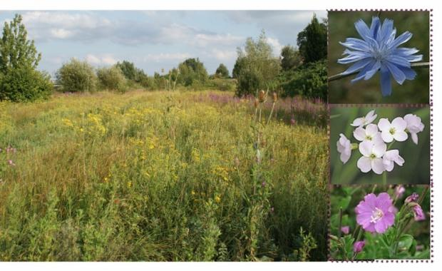 Land in Padiham could become wildflower meadow