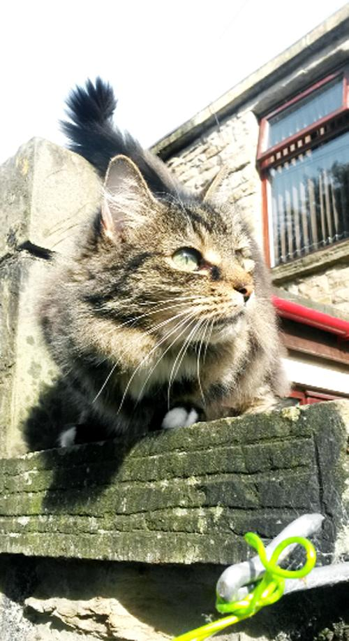 Padiham 'cat street' residents warn of poisonings after deaths