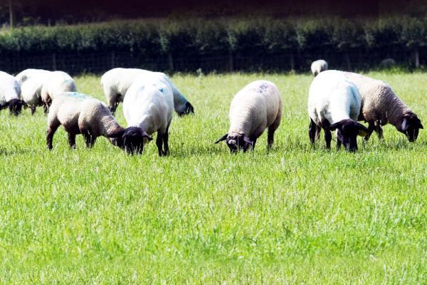 Shock increase in East Lancashire rural crime