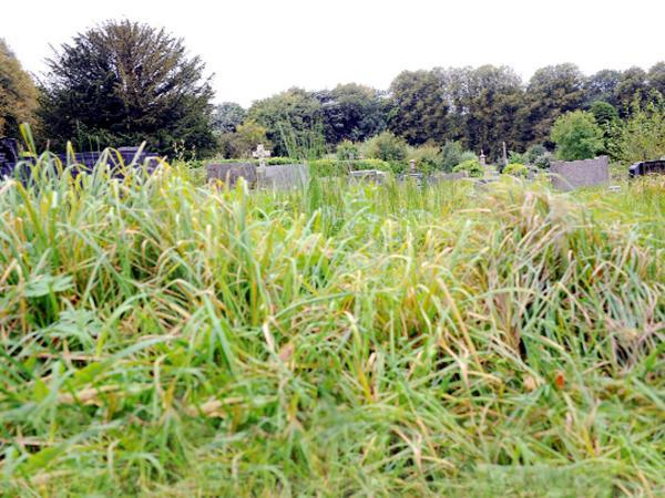 The overgrown condition of Darwen Cemetery for which Groundacre Engineering is offering help