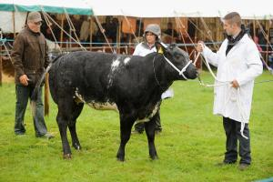 One-day Trawden Show will go on despite date clash