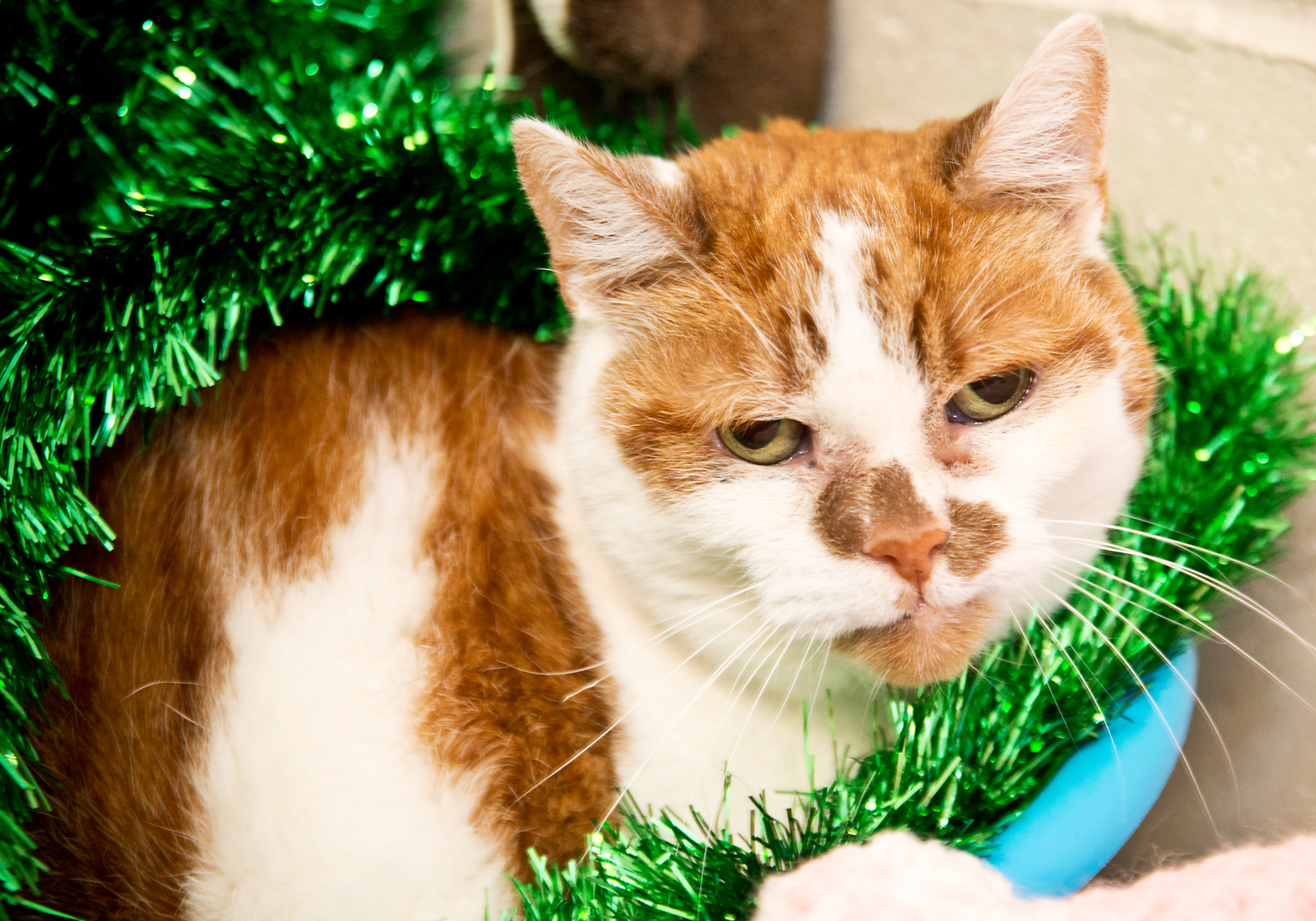 IN PICTURES: Can you help give these cats a fur-ever home ...