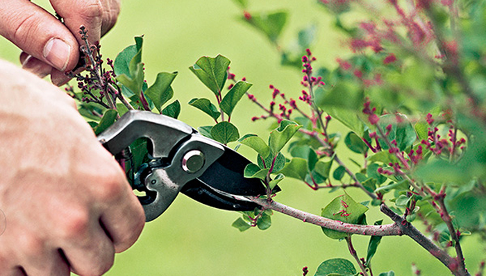 Springtime Pruning Skills Workshop
