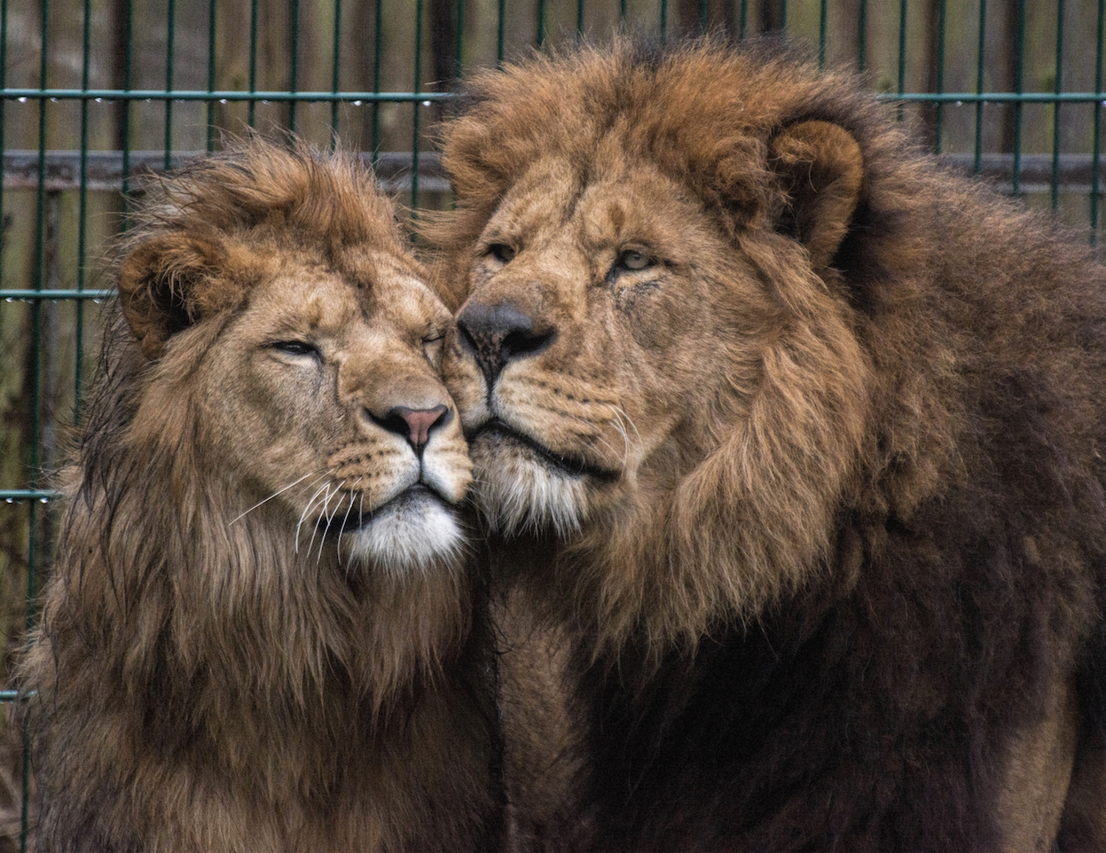 Father and son at Blackpool Zoo