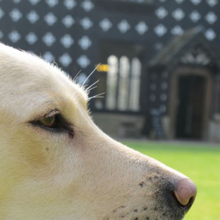 Samlesbury Hall: 7th Annual Fun Dog Show