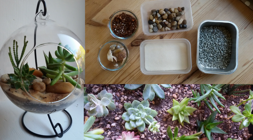 Terrarium Making Workshop