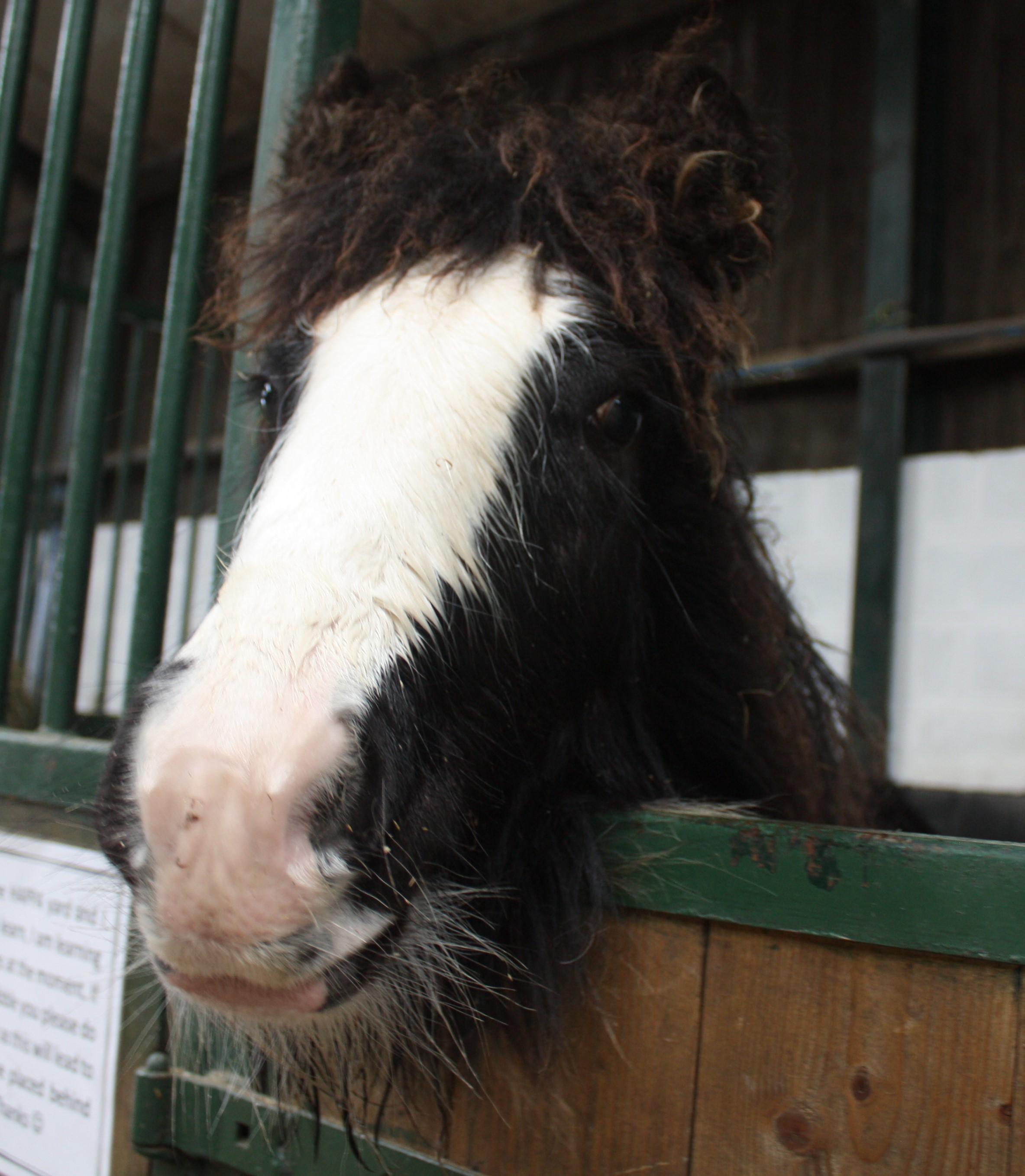 LETTER: Support local Horses and Ponies Protection Association